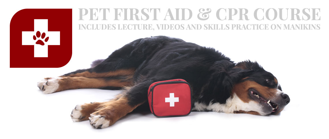 Pet First Aid ARTICLEART